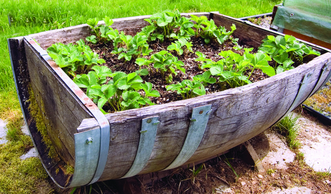 Oak Barrel Herb Garden