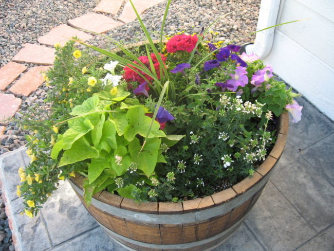 Oak Barrel Planter Ideas