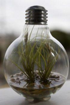 Old light bulb terrarium