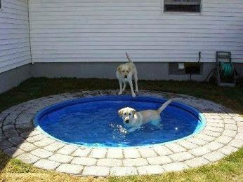 Pallet Pool Deck For Dogs