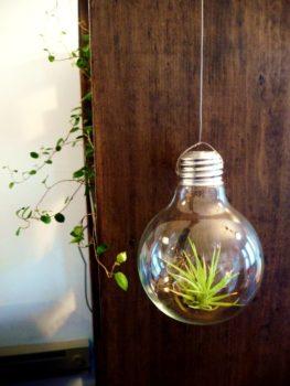 Plant light bulbs