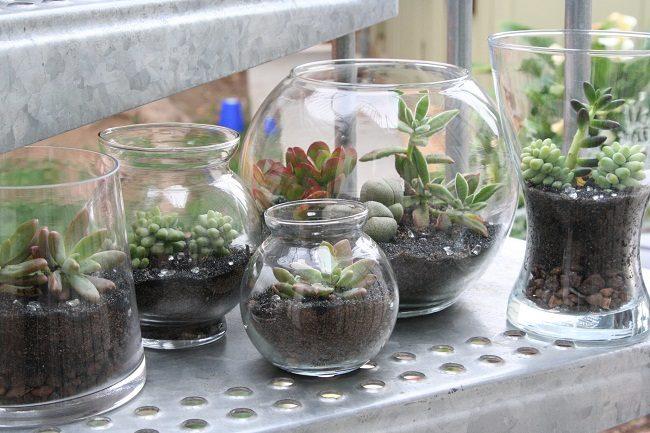 Terrarium containers