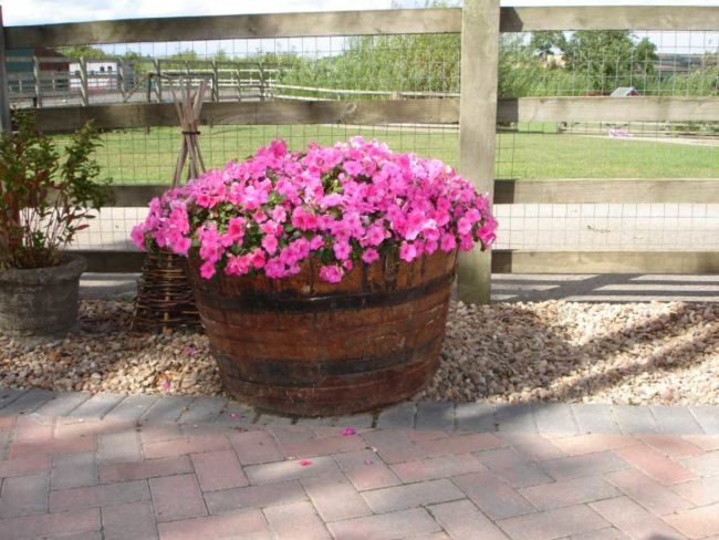 Use of Wine Barrel As Planters