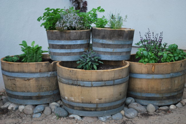 Wine Barrel Herb Garden