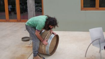 Wine Barrel Planter Care