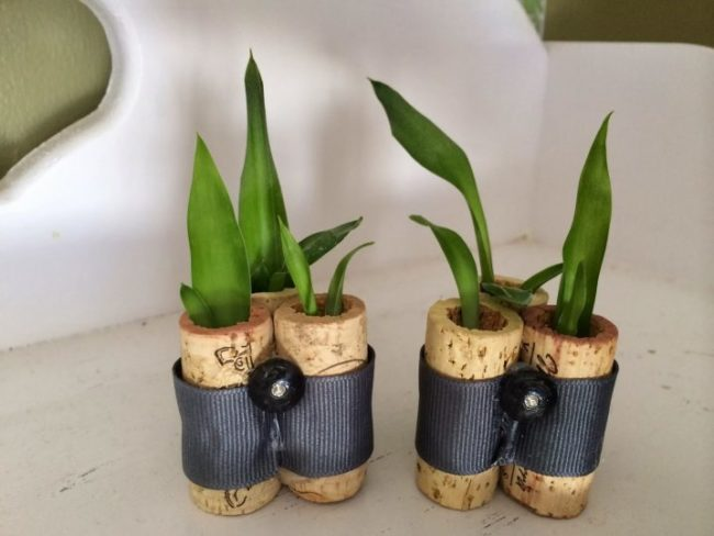 Wine Bottle Cork Planter