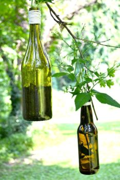 Wine Bottles Into Hanging Planters
