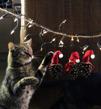 Pinecone Ornaments