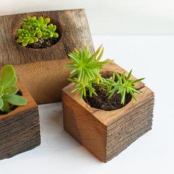 Small wooden boxes