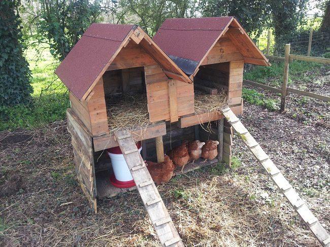 Build Pallet Chicken Coop