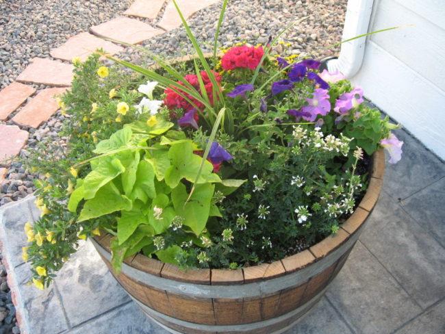 Oak Barrel Planter Ideas