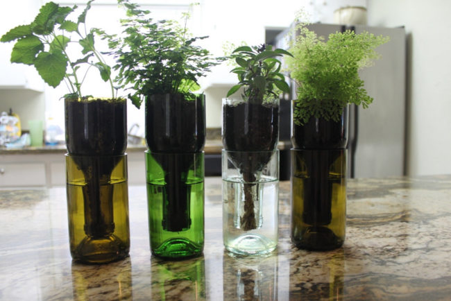 Self-Watering Wine Bottle Planter