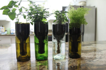Cool Wine Bottle Planter for Gardens