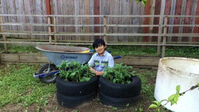 Tire Planters for Potatoes