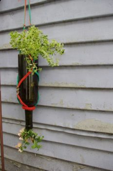 Turn a Wine Bottle into a Planter