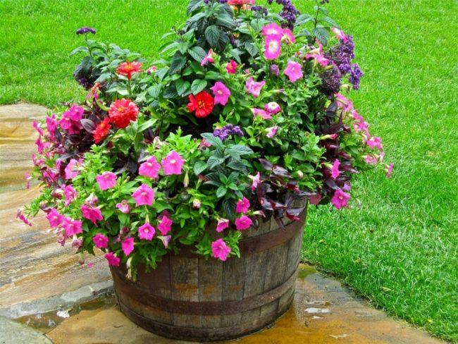 Wine Barrel Planter Ideas