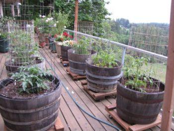 Wine Barrel Planter Vegetable Garden