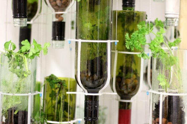 Wine Bottle Hydroponic Planters
