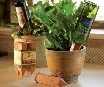 Wine Bottle Into Planter