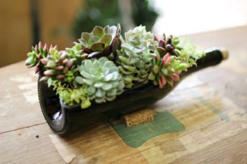 Wine Bottle Succulent Planter