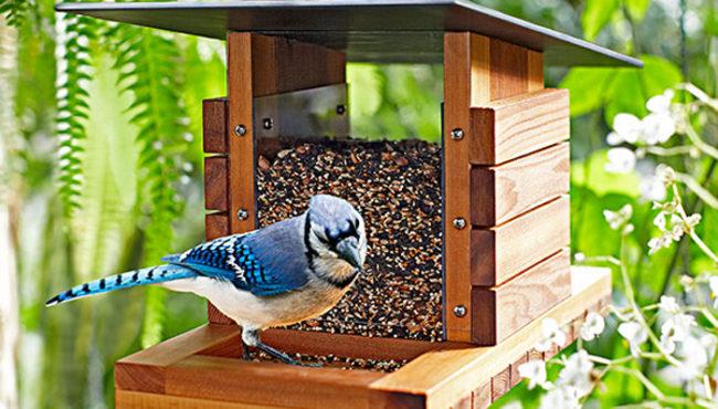 building bird feeders
