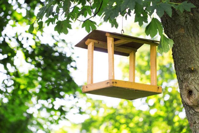 make an easy bird feeder