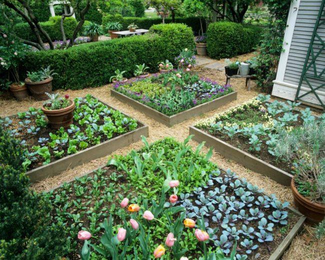 Garden Bed Ideas