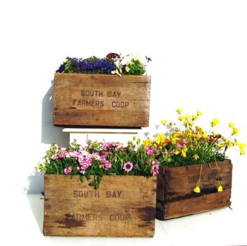20+ Wooden Garden Crates