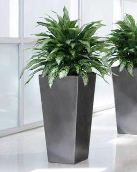 Trendy Artificial Indoor Plants Inhabit Zone