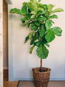 Trendy Artificial Indoor Plants | Inhabit Zone