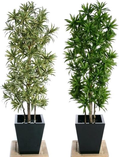 Pool Container Plants